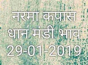 Mandi Bhav 29-01-2019 | मंडी भाव आज का नरमा कपास धान