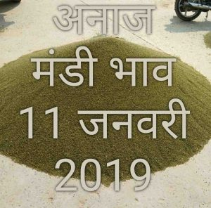 mandi-bhav-today-11-01-2019