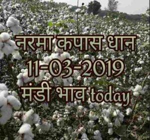 anaj-mandi-bhav-11-03-2019 , sarso ka rate , gawar bhav